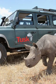 Tusk is a dynamic and adaptable organisation with over 28 years of experience initiating and funding wildlife conservation, community development and environmental education programmes across Africa. Time For Africa, Work In Africa, Sustainability Education, Environmental Education, Sailing Regatta, Rainforests, Wildlife Conservation, Hyena, Endangered Species