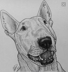 Bull Terrier Tattoo, Miniature Bull Terrier, English Bull Terriers, Best Dog Breeds, Animal Tattoos, Bullies, Animal Drawings, Dog Art, Dog Love