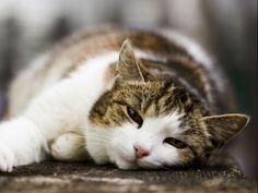 Fibrosarkom: Wenn das Impfen einer Katze gefährlich wird – Foto: Shutterstock / Wojciech Wandzel    www.einfachtierisch.de