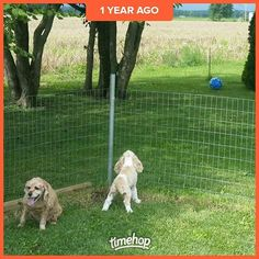 Lol I remember this! Silly puppy barking at the ball. Kelsey was just chilling. Miss that boo! #newdog #olddog #puppies #timehop #cockerspaniels #cockersofinstagram #cockers #dogs