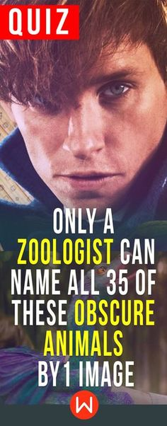 Animal quiz: Are you basically a zoologist? This Obscure animals test is only for people who really love biology and animals. Can you name every creature on this animal trivia quiz? Let's see! Zoologist trivia questions, buzzfeed quizzes, playbuzz quiz, rare animals quiz, fantastic beasts.
