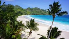 Romantic or not, in love or singles, a picnic on the incredibly white sand of the Seychelles beaches, with the turquoise. Seychelles Beach, Best Love Stories, Crystal Clear Water, Palm Trees, Beaches, Picnic, Romantic, Travel, Outdoor