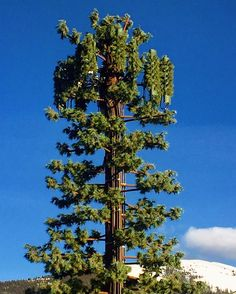 A tree or not a tree? ☺️💁🏼🌲 A lot of effort has been put into disguising this cell tower as a tree.  Have you seen this new trend?  #keystone #colorado #celltowertree #faketree #whatinthehellisthat #huh #why #aesthetics #aestheticallypleasing #mondaymadness