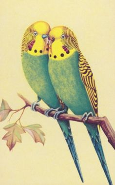 """vintage budgies ~That""""s  the stark-staring look Puck gets while entertaining the idea of taking a bite of my lip."""