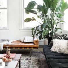 Please teach us how to keep plants as luscious and ALIVE as this?! Put your tips in the comments Pic via @homepolish & @claireesparros . . . . . #ohwhatsthis #owt #houseplants #botanicals #sodomino #bohodecor #myhomevibe #lovetohome #interiorstyle #livingroomdecor#livingroomideas #lightingdesign #mydomaine #loungedecor #interiordesign #theworldofinteriors #interiorstyled #interiortips #homedesign #crittall #elledecor #bohemian #decorlovers #instadecor #flashesofdelight #vogueliving