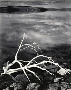 May 28, 1947  White Branches, Mono Lake, California [close-up of bleached branches, lake surface reflecting clouds] by Ansel Adams 84.93.24