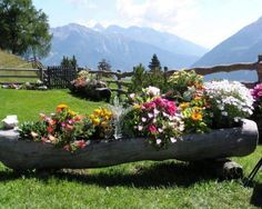 fallen log with flowers - Google Search