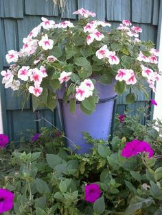 A pot of impatience suspended over a whiskey barrel of petunias