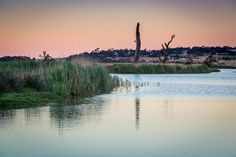 Murray Bridge Wetlands at Sunset Murray River, Melbourne, Bridge, Victoria, Australia, Sunset, Mountains, Water, Travel