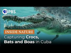 In case you missed this documentary about Cuba's Bats and Boas in the Dark Dark Cave, Public Television, Cuba Travel, Natural World, Cool Watches, Documentary, Filmmaking, The Darkest, Wildlife