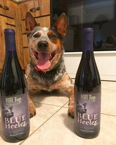 What?  Blue Heeler wine?  I love blue heelers.