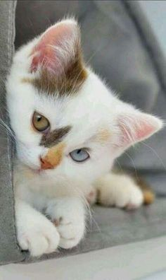 puppies and kittens - puppies kittens . puppies kittens together . puppies kittens so cute . puppies and kittens . cute puppies and kittens . puppies and kittens together Cute Baby Cats, Cute Cats And Kittens, Cute Baby Animals, Kittens Cutest, Funny Animals, Funny Cats, Kittens Meowing, Ragdoll Kittens, Tabby Cats