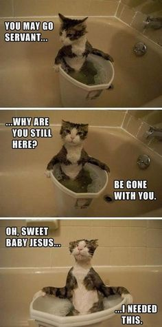 I needed this...me tonight...the kitten was the accidental bather - fell in while being a pest:)