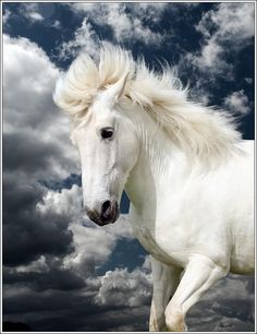 Revelation 19:14  The armies of heaven, dressed in pure white linen, followed him on white horses.  NLT