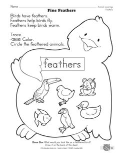 Fine Feathers, Lesson Plans - The Mailbox