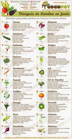 Correo: Maria Damelys Roa Duque - Outlook Edible Garden, Vegetable Garden, Garden Plants, Organic Gardening, Gardening Tips, Urban Gardening, Bonsai, Natural Farming, Urban Farming