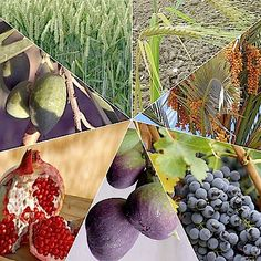The Seven Species of Israel Are Used to Celebrate Tu BiSh'vat