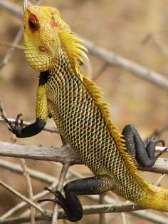 Reptiles and Amphibians Reptiles Et Amphibiens, Mammals, Beautiful Creatures, Animals Beautiful, Types Of Chameleons, Animals And Pets, Cute Animals, Chameleon Lizard, Karma Chameleon
