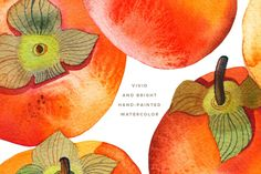 Watercolor Persimmon Collection is a pack of 6 persimmons (hand-painted from life and then scanned at 1200 dpi and cleaned out of background), as well as Persimmon Fruit, Fruit Arrangements, Graphic Illustration, Illustrations, Photoshop Actions, Photo Editing, Hand Painted, Watercolor, Graphic Design