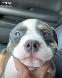 Cute Baby Dogs, Cute Dogs And Puppies, I Love Dogs, Doggies, Cute Animal Photos, Funny Animal Pictures, Cute Little Animals, Cute Funny Animals, Beautiful Dogs