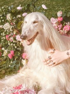 """midnight-charm: """"Gucci celebrates the year of the dog Photography by Petra Collins Art Director: Christopher Simmonds """" Pink Nature, Petra Collins, Dog Years, Dog Photography, Chinese New Year, Mannequins, Aesthetic Pictures, Beautiful Creatures, Cute Dogs"""