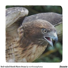 Red-tailed Hawk Photo Stone Trivets