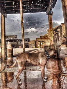 ghost town - goldfield az