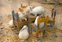 Bunny Tea Party....cute