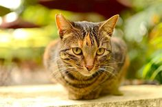 Cat Nutrition Health - The minute you notice something's off about your cat, call your vet — you'll be glad you did. Here are the 10 most common cat health problems. Cat Symptoms, Cat Health Care, Sick Cat, Cat Nutrition, Health Facts, Health Zone, Health Memes, All About Cats, Art Design