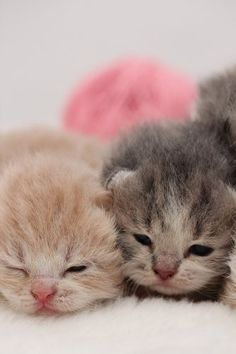 2 newborn kittens sleepy & sweet