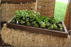 Hay bale gardening with a frame to keep the soil in...more attractive than the regular hay bale garden and no bending or weeds.