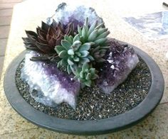 Staged by Danielle Romero. Amethyst and Echeverias in an upcycled plant saucer.