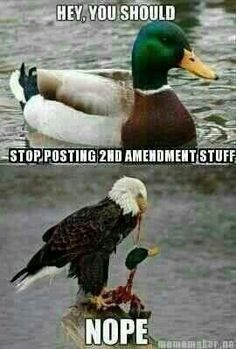 Hot Dogs & Guns: Posting Second Amendment Stuff Funny Memes, Hilarious, Funny Signs, Funny Shit, Funny Quotes, Jokes, Military Humor, Dont Tread On Me, American Pride