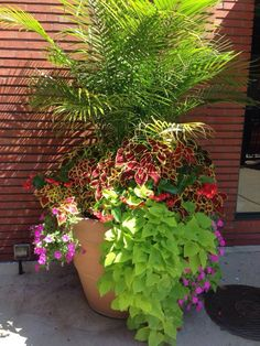 Coleus, Vinca, Sweet Potato Vine, Palm