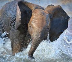 #Elephant - Bathing Beauty