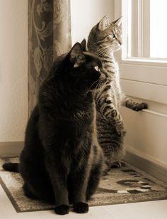 Zwei alte Ornithologen beim Fachsimpeln von Peer F. // Zwei Kater schauen in interessanter Pose aus dem Fenster. Vor allem der getigerte hat was von einem Erdmännchen.