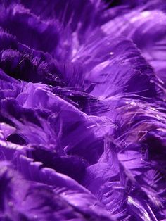 Purple Feathers by Michelle in Ireland