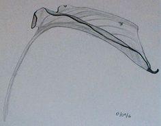 "Check out new work on my @Behance portfolio: ""Hojas en grafito"" http://be.net/gallery/45080435/Hojas-en-grafito"