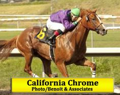 California Chrome  Winner of the 2014 Kentucky Derby and the Preakness Stakes Winner 2014!