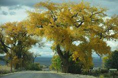 A Crisp Fall Day–Wednesday, October 29, 2014   Life on a Colorado Farm