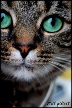 Cat's Eyes by AFireOutsideMe.deviantart.com on @deviantART