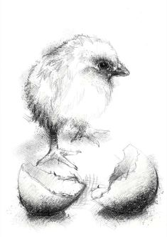 Bird Drawings, Pencil Art Drawings, Animal Drawings, Bird Sketch, Sketch A Day, Animal Sketches, Art Sketches, Basic Sketching, Chicken Drawing