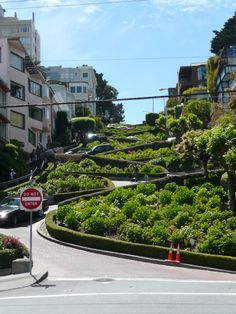 Lombard Street, San Francisco Lombard Street, My Photos, San Francisco, Sidewalk, Street View, Plants, Travel, Life, Viajes