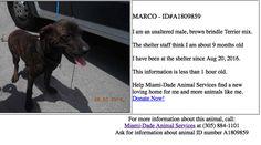 Miami-Dade Animal Services www.miamidade.gov/animals 7401 NW 74th Street Miami, FL 33166 Voice: (305) 884-1101Fax: (305) 805-1619