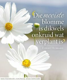 Die mooiste blomme is dikwels onkruid wat verplant is __ⓠ Elbert Hubbard __ Afrikaanse Quotes, Inspirational Qoutes, New Journey, Printable Quotes, Religious Quotes, Woman Quotes, Things To Think About, Verses, Wisdom
