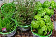 Planting Herbs | Fresh flavor from your back porch