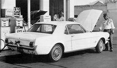 Mustang 1965 Vintage shot