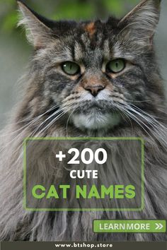 Personal preferences usually play a role when choosing cat names or kitten names, so deciding on names isn't easy at all. Choosing a cat name or kitten name needs a bit less practical thought than choosing a name for a dog or a puppy though. Cute Cat Names, Kitten Names, Fun Facts About Cats, Cat Facts, Cat Lady, Cool Cats, Puppies, Popular, Play