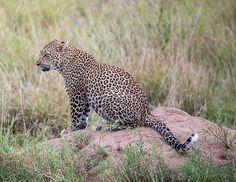 Gosheni Safaris (@gosheni_safaris) | Twitter African Safari, Tanzania, Wildlife, Tours, Twitter, Animals, Animales, Animaux, Animal