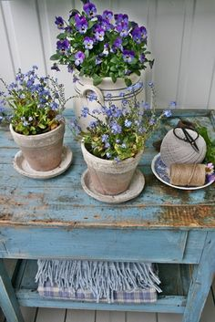 Love the old pots and the purple flowers